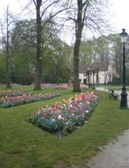 Bruges_flower_beds_-_poppies