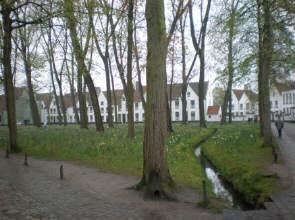 Bruges_-_Beguinehof_garden